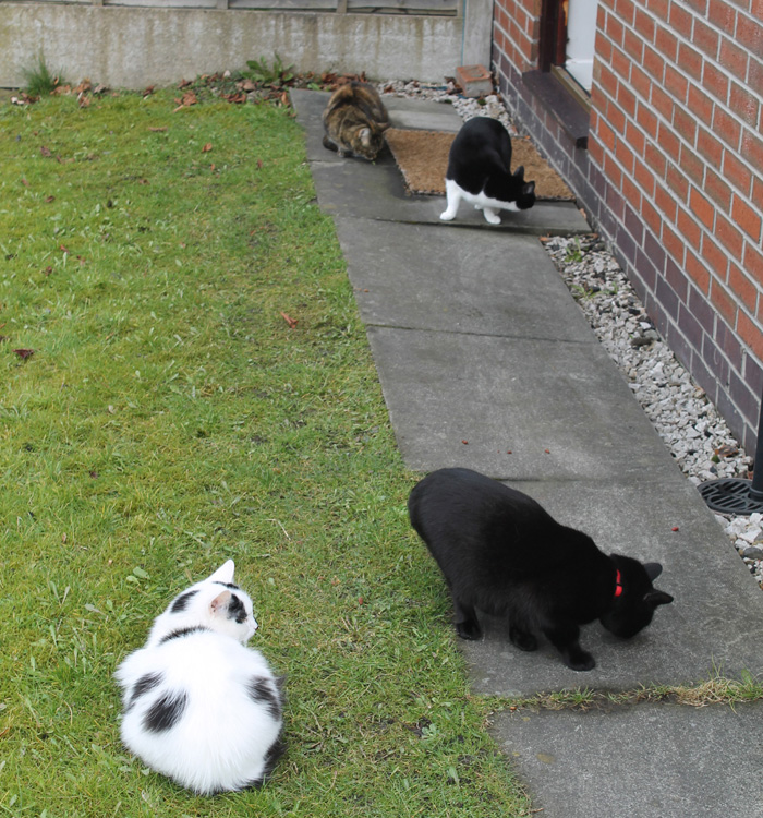 Clockwise from bottom left: Fluffy White, Maga, Matti and Jinxie
