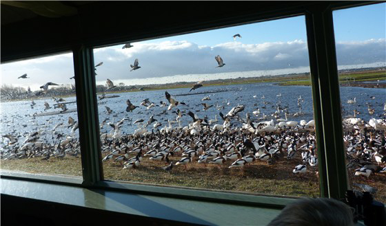 View of wetlands from the central observatory at Martin Mere. Photo courtesy of http://www.thebiggesttwitch.com